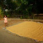 Dziewczynka z kijem pilnuje ryżu przed turystami z Europy...