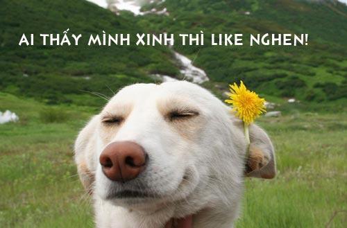 Ảnh chó gắn hoa làm dáng