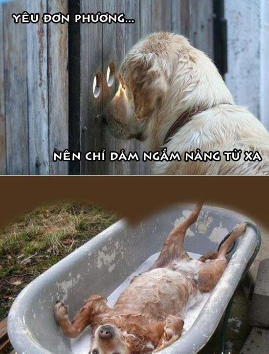 Ảnh hài hước chú chó yêu đơn phương