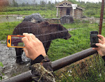 the most photographed bear in Alaska