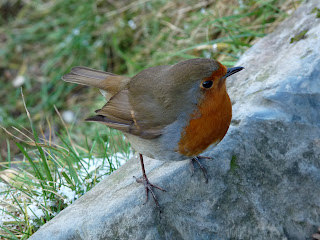 Mr. Robin strikes a pose!!
