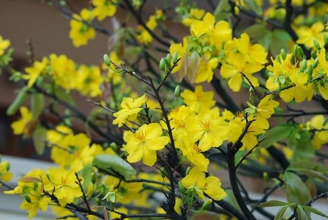 Những bài thơ Mùa Xuân với thể thơ Thuận Nghịch độc