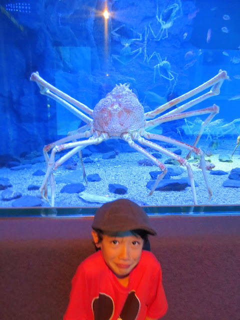 Eidan at the Osaka Aquarium Kaiyukan