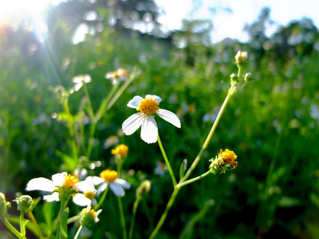 Tìm ảnh hoa xuyến chi