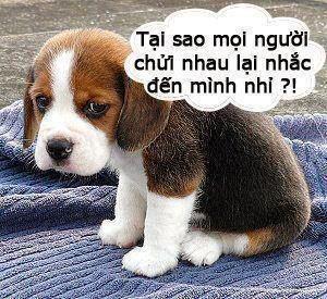Hiểu Lầm Vì SMS Không Dấu: Do Con Chó