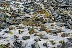 Schotter, Schnee und überlebende Pflanzen