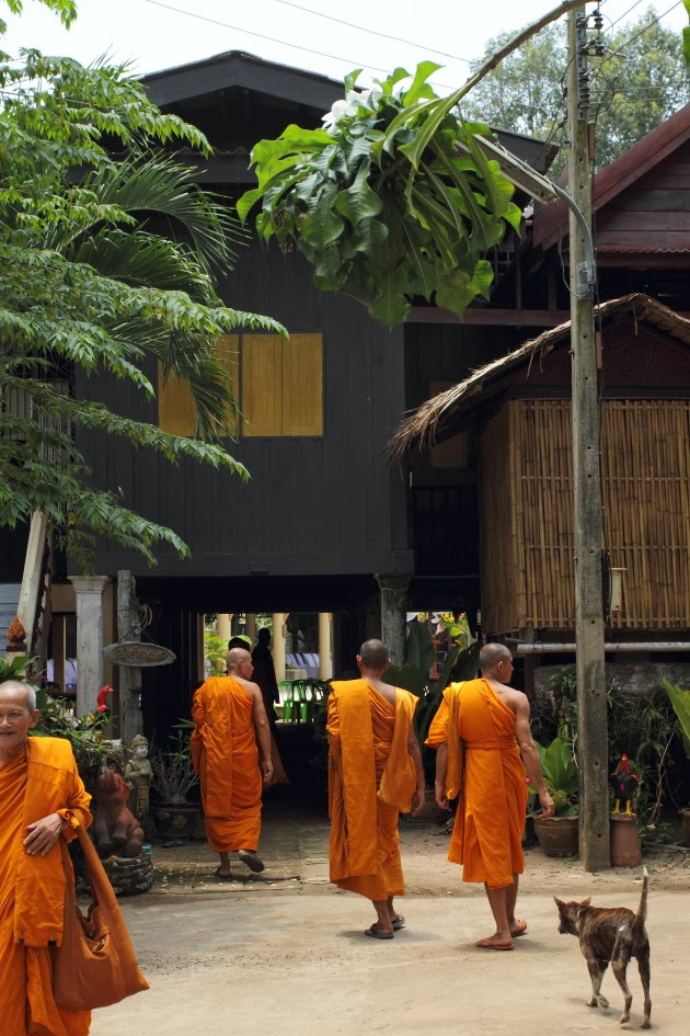 Buddhist Monks walk in Ban Dong Krathong Yam Village, Thailand