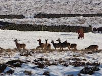 Zooming Into A Herd Of Deer