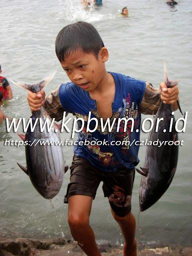 mengangkat ikan tuna pelabuhan majene