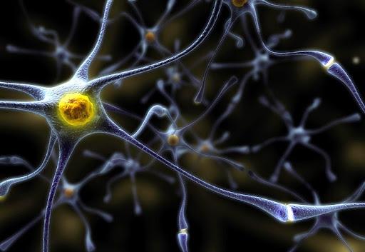 Photo Как восстанавливаются нервные клетки?