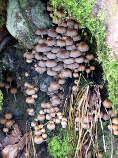 Fungi next to the Garburn Pass