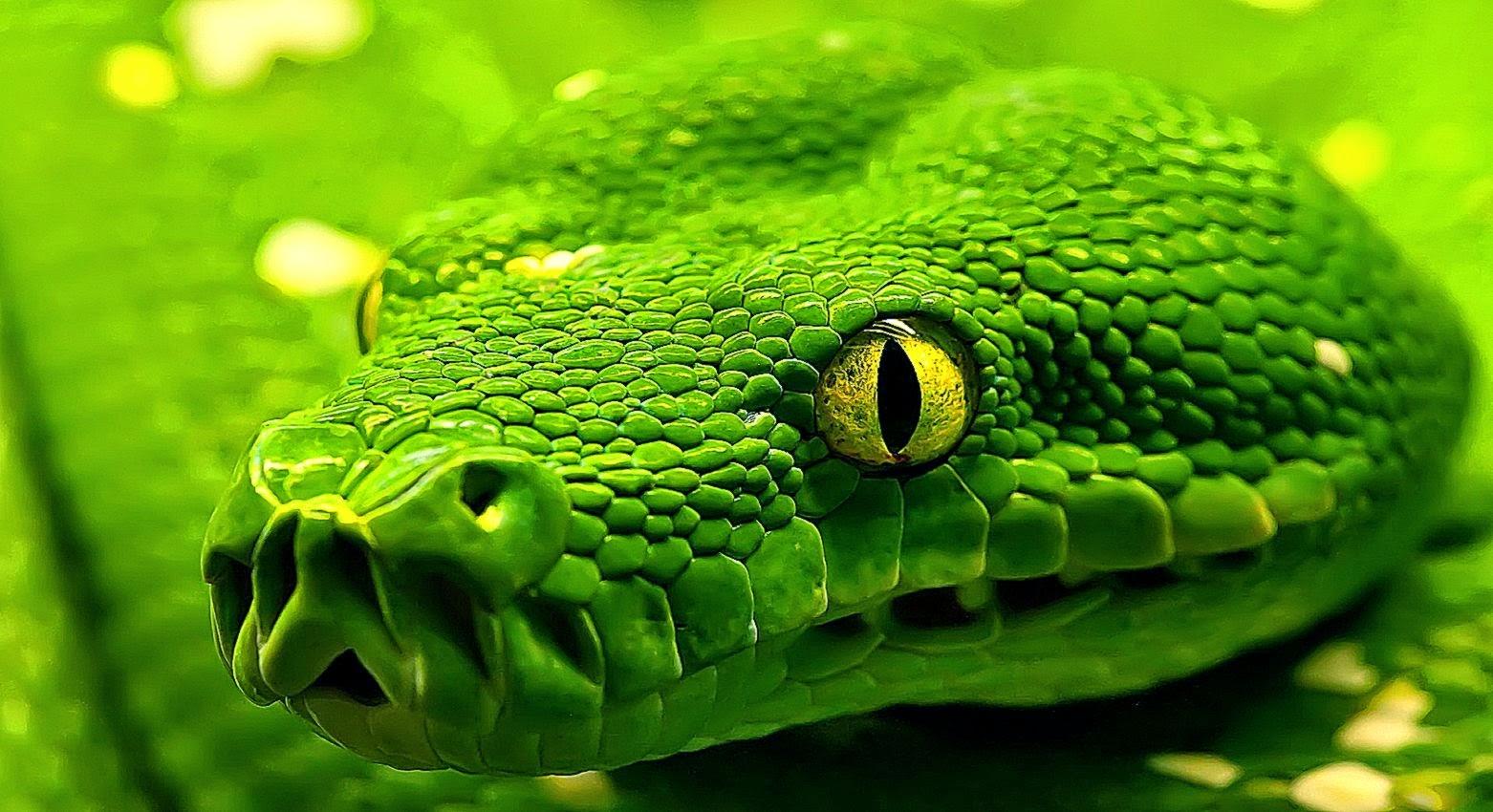 3d snake dancer porn picture