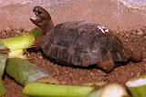 Baby Tortoises - Charles Darwin Science Center - Puerto Ayora, Santa Cruz Island