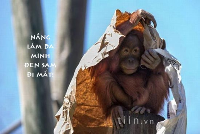Ảnh vui, hài hước về họ hàng nhà Khỉ 4