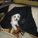 Delilah keeps warm