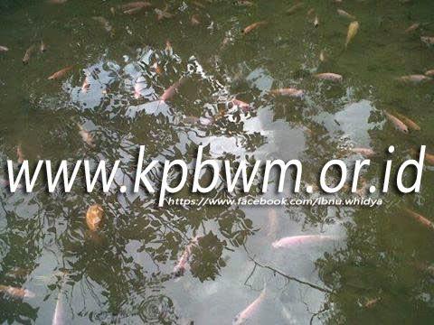 kolam ikan di objek wisata rawa bangun