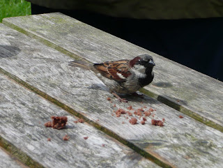 A brave little sparrow