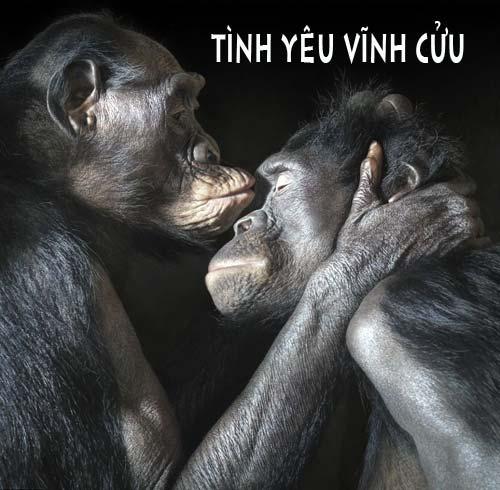 Ảnh vui, hài hước về họ hàng nhà Khỉ