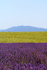 Lavender, Sunflowers, Mountain and Sky (July 2011, WineInProvence)