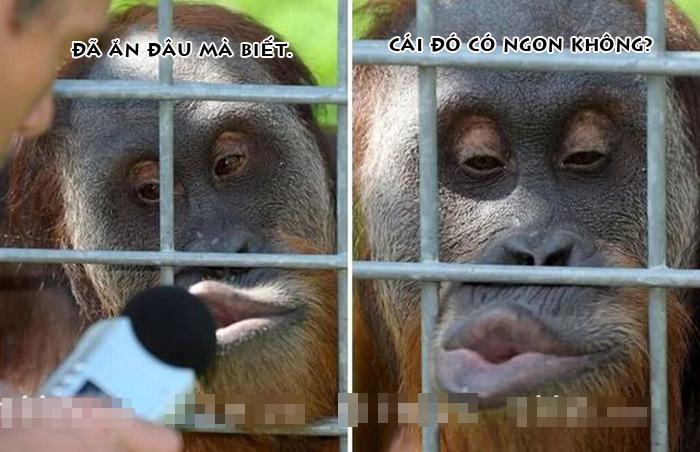 Khỉ tạo dáng buồn cười