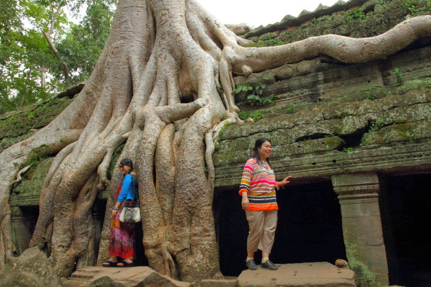 Mighty tree trunk at Ta Prohm
