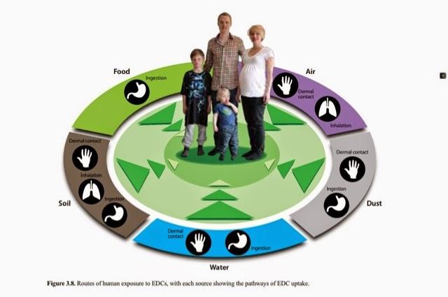 vias de contaminación por disruptores endocrinos