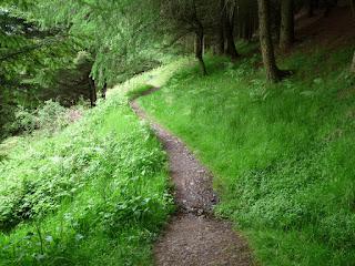 Path through Swinburns Park Woods