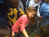 Meredith at the Touch-Tidepools, Steinhart Aquarium, San Francisco