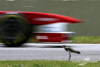 Ferrari Фернандо Алонсо проезжает мимо птички на трассе Интерлагос на Гран-при Бразилии 2011