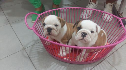Maskote Pet Shop, Av. Darcy Vargas, 2262 - Chapada, Manaus - AM, 69050-020, Brasil, Loja_de_animais, estado Amazonas