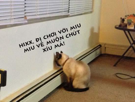Ảnh chế vui Mèo bị phạt