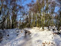 Woods On Froggatt Edge