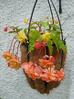 A lovely hanging basket