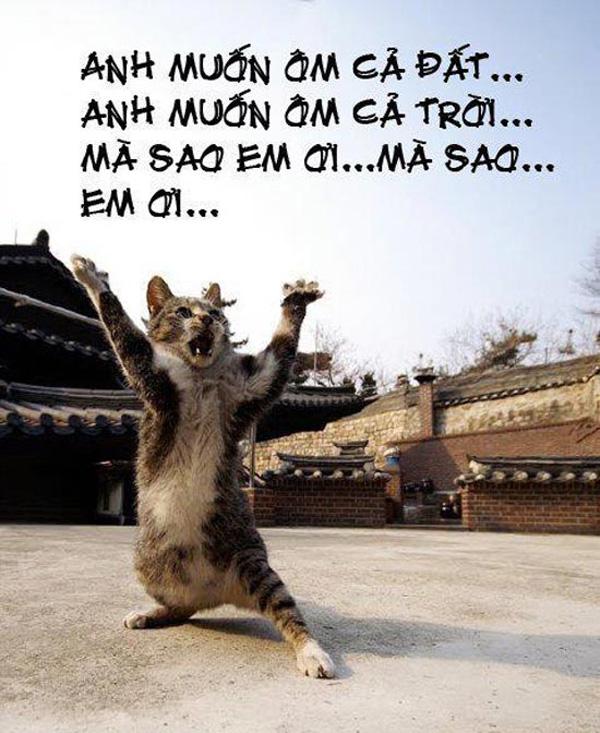 Ảnh mèo hát anh muốn ôm cả đất, anh muốn ôm cả trời