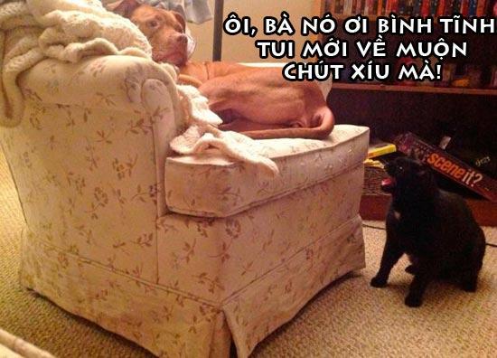 Ảnh vui chú chó bị phạt vì về trễ