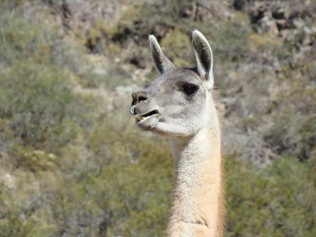 Fauna en la Reserva Villavicencio