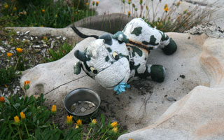 Begging cow, Sculpture by the Sea