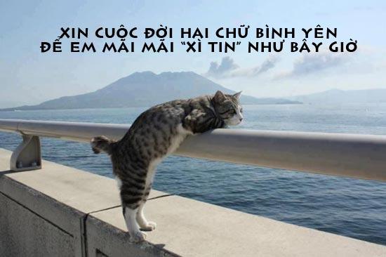 Chú mèo xì tin