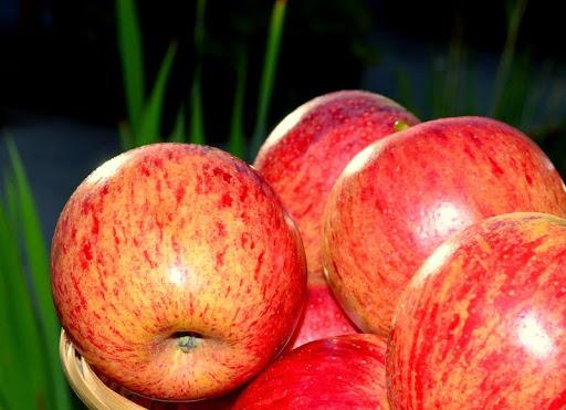 Apples - food