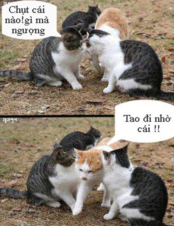 Cười vỡ bụng ảnh chế mèo