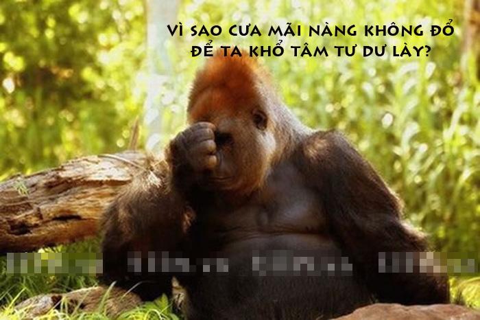 Ảnh chế hài hước về Khỉ