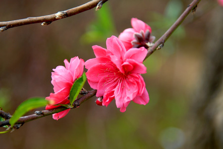 Những bài thơ mừng ngày Tết đến, Xuân về hay nhất