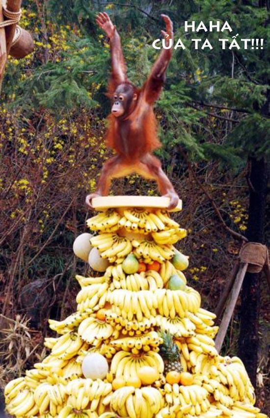Ảnh vui khỉ ăn chuối