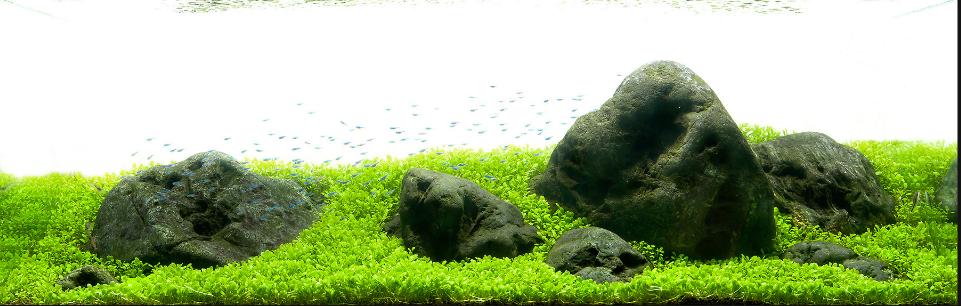 bộ sưu tập bố cục núi đá cho hồ thủy sinh