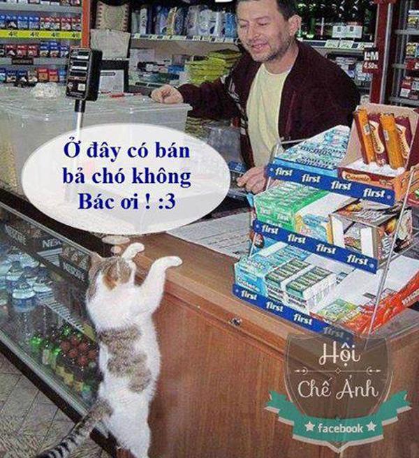 Ảnh chế mèo mua thuốc bã chó