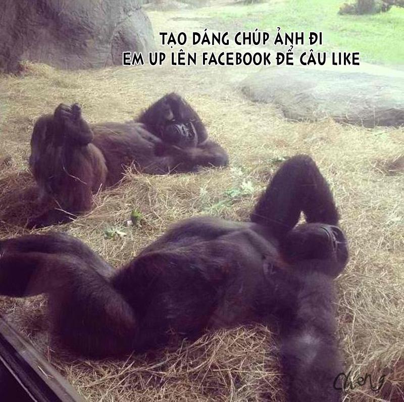 Khỉ chụp hình câu Like