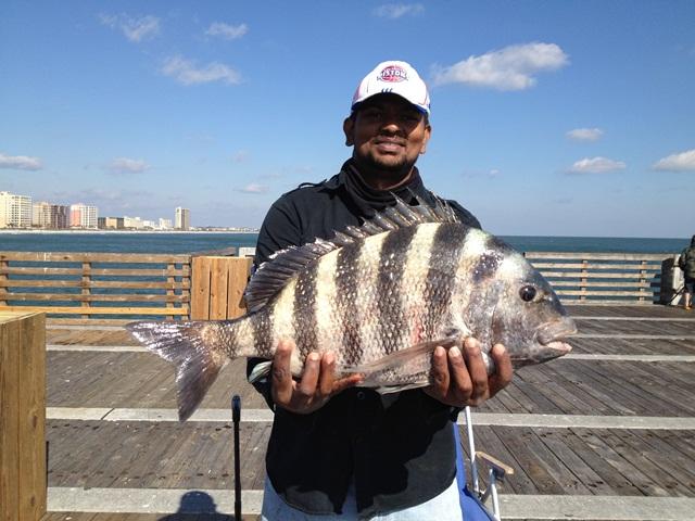 Jax beach pier piling monster 02 11 21012 non yak for Fishing report jacksonville fl