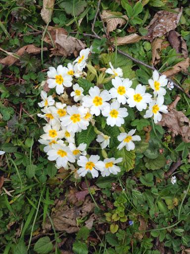 Memlekete Bahar Gelmiş
