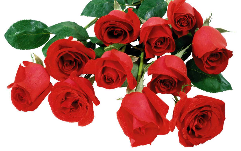 Ảnh hoa hồng nhung đẹp nhất