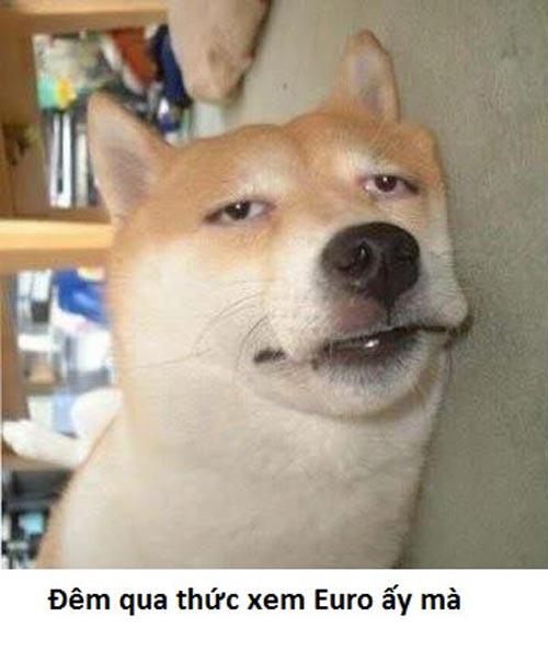 Ảnh vui chú chó thức khuya xem đá bóng Euro